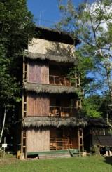 Yagmur Ormanlar ve Amazon Havzasii